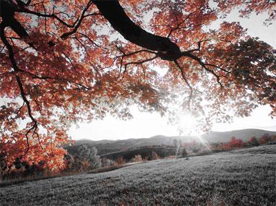 Работа с цветом в Photoshop Express Online