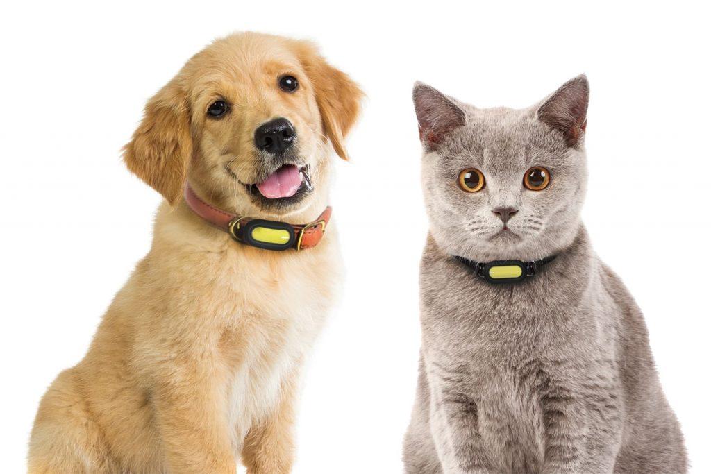 PETBLE Dog Cat