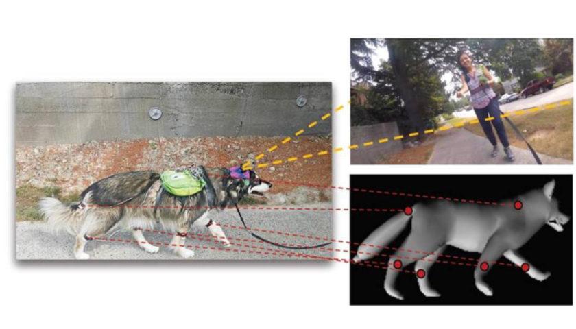 Обучить искусственный интеллект думать как собака
