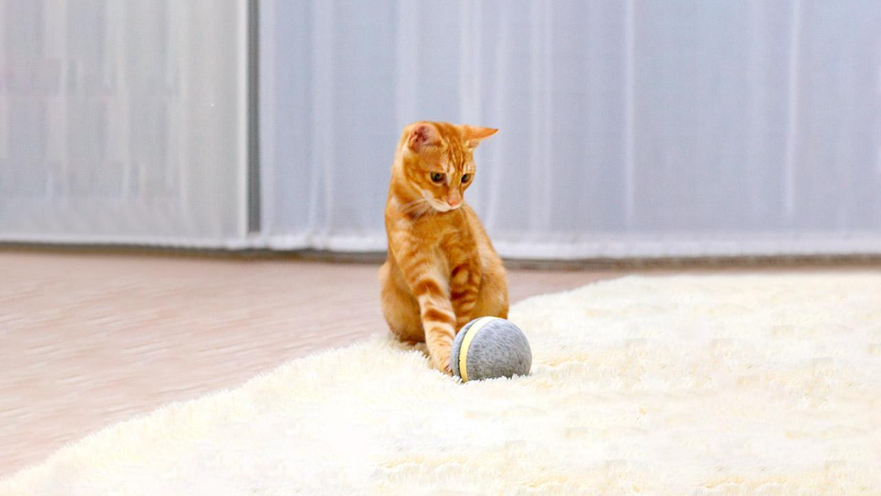 Wicked Ball